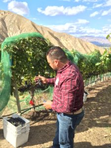 Winemaker Jaime discusses the grape harvesting process.